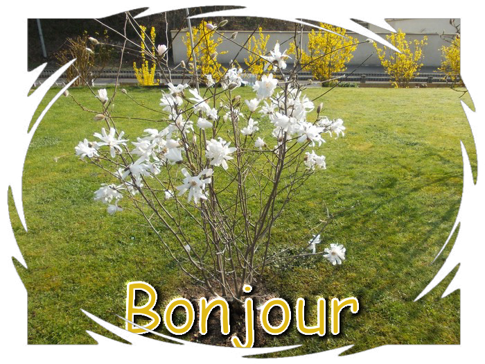 vendredie 14/3/2014 idem Bonjour-447a30f