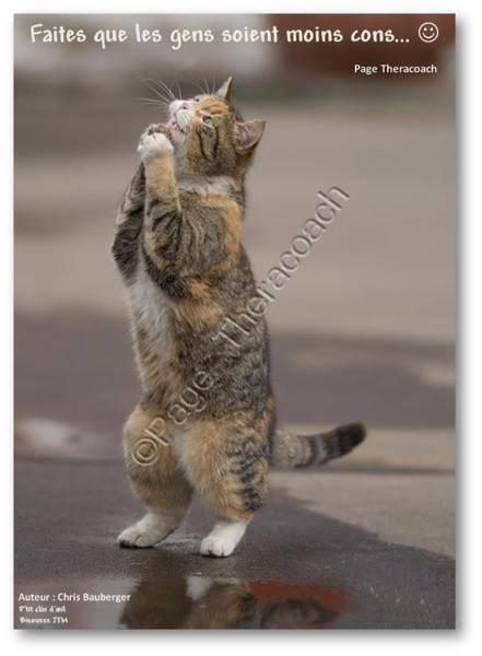 """Résultat de recherche d'images pour """"gilfs des chats humour"""""""